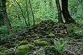 Lagodekhi Nature Reserve1.jpg