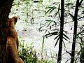 Lakeside lioness.jpg