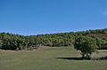 Lalbenque - 20140922 - Vers le Gascou 1.jpg