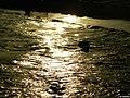 Landa Golden Beach - Ayia Napa - panoramio.jpg