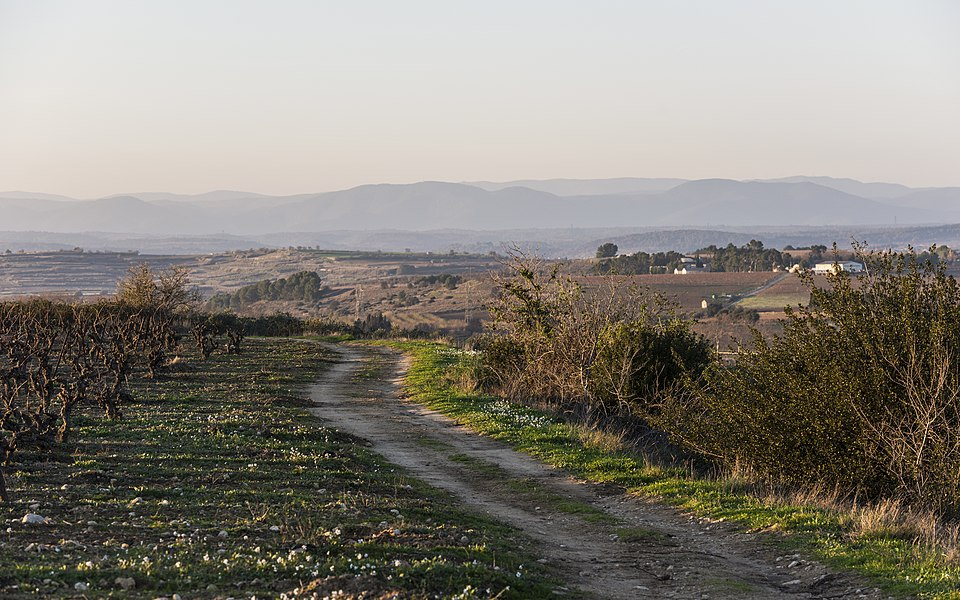 Landscape in the commune of Montady, Hérault, France