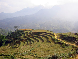 Anthropization - An example of advanced anthropization: the cultivation of rice in terraces in Vietnam