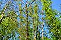 Landschaftsschutzgebiet Gütersloh - Isselhorst - Wäldchen am Krullsbach (2).jpg