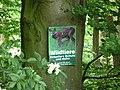 Landschaftsschutzgebiet Horstmanns Holz Melle - Waldanfang- Datei 5.jpg