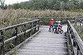 Landschaftsschutzgebiet Obere Lobau.jpg
