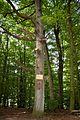 Landschaftsschutzgebiet Solling – Lunau-Tal bei Hardegsen - An den drei Eichen (1).jpg