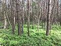 Landschap in Nationaal Park Sallandse Heuvelrug (5).jpg