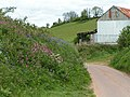 Lane and wild flowers - geograph.org.uk - 1288342.jpg