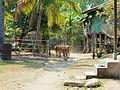 Laos.- Ile de KHONG.jpg
