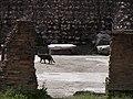 Largo di Torre Argentina cat 7.jpg