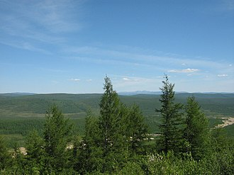 Stanovoy Range - Image: Larix gmelinii Neryungrinskiy Rayon 1