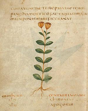 Pseudo-Apuleius