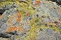 Lichen (7).jpg