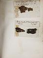 Lichenes Helvetici pars altera 005.jpg
