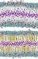 Lipid Molecules (5941036454).jpg