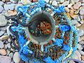 Lobster pot (4591982669).jpg