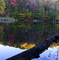 Log lake autumn reflection - West Virginia - ForestWander.jpg