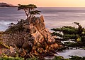 Lone Cypress (Unsplash).jpg