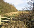 Looking over the fence - geograph.org.uk - 322619.jpg