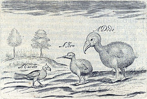 Sir Thomas Herbert, 1st Baronet - Artwork by Sir Thomas Herbert from the year 1634 showing a broad-billed parrot, a red rail, and a dodo