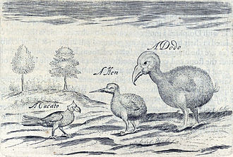 Broad-billed parrot - Sketch by Sir Thomas Herbert from 1634 showing a broad-billed parrot, a red rail, and a dodo