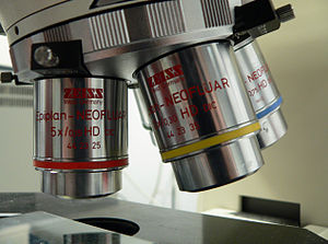 Objective (optics) - Several objective lenses on a microscope.