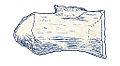 Macrurosaurus semnus.jpg