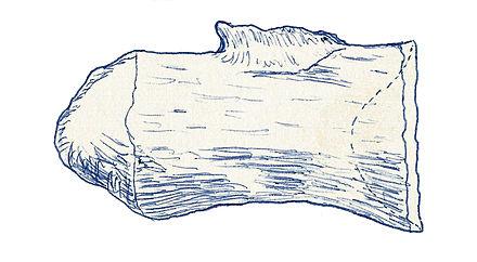 Macrurosaurus