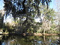 Magnolia Plantation and Gardens - Charleston, South Carolina (8555384015).jpg