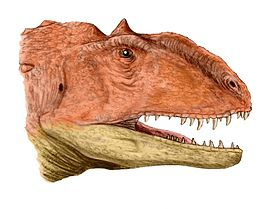 Majungasaurus head BW.jpg