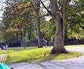 Manor Park - geograph.org.uk - 1708278.jpg