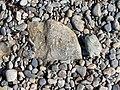 Marshall Point Rocks.jpg