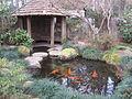 Massee Lane Gardens fish pond.JPG