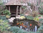Massee Lane Gardens fish pond.JPG