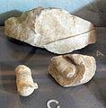 Mausoleo di alicarnasso, frammenti vari 01.JPG
