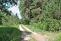 Meža ceļš, Ropažu pagasts, Ropažu novads, Latvia - panoramio (1).jpg