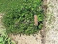 Medieval garden (Perugia) 19.jpg