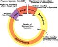 Microsporidia History.png