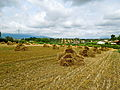 Mietitura (Ancarano in provincia di Teramo).JPG