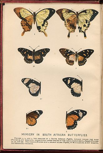 The Colours of Animals - Frontispiece: Mimicry in South African Butterflies, the only chromolithograph in the book
