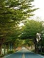 Minzhu Street leading through a tunnel of trees.jpg