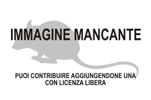 Immagine di Pelomys minor mancante