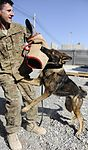 Mobility Airman profile, Joint Base Charleston NCO supports security forces, joint expeditionary ops in Afghanistan 110401-F-BQ904-002.jpg