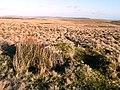 Moorland east of Pant-y-Llyn Hill - geograph.org.uk - 682154.jpg