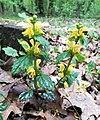 Morasko Nat. Reserve, Poznan, plants (1).jpg