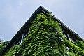 Morgan House Kalimpong - Beautiful ivy clad facade.jpg