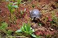 Mountain Bog 2013 (11223407025).jpg