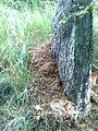 Mravenci u Pekla mají svůj domov.jpg