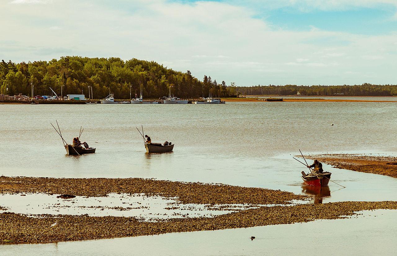 Big Island Fishing License