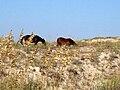 Mustangs & Oats.jpg